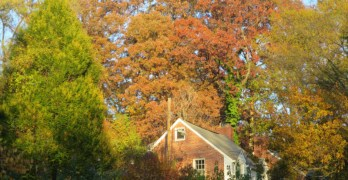 """DC Council bill would make more trees """"special"""""""