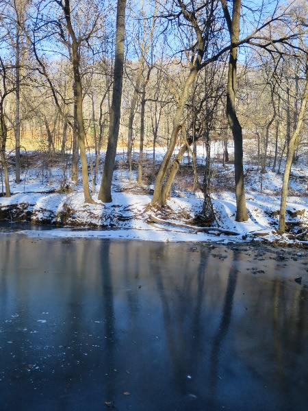 Iced over Broad Branch