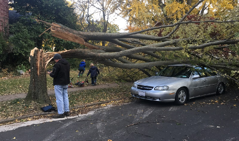 Joe Burckle of Urban Forestry and a couple of neighbor boys check out the damage. (photo courtesy of Malachy Nugent)