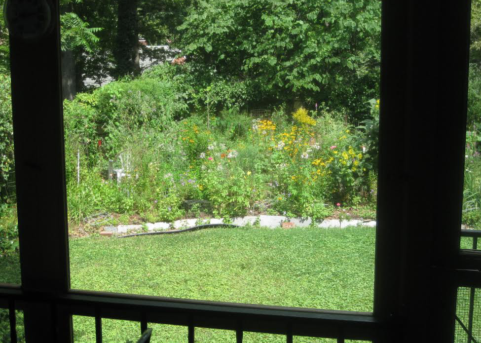The view from the author's back porch.