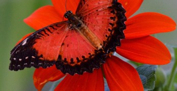 Neighbors Recommend: The butterflies of Montgomery Parks' Brookside Gardens