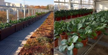 DATE ADDED: Tour UDC's rooftop veggie and pollinator garden on Dec. 13