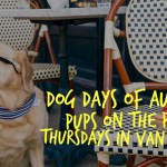"""Thursdays in August: """"Pups on the Patio"""" happy hours at Van Ness restaurants"""