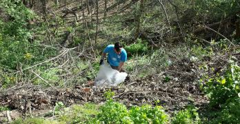Volunteer at Soapstone, Broad Branch, Peirce Mill during MLK Rock Creek cleanup
