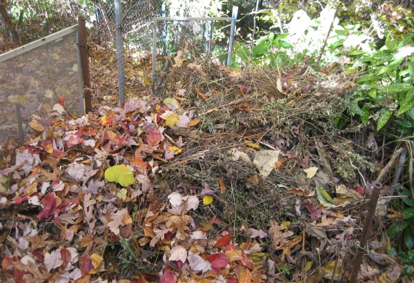 Home for the winter - a compost heap. (photo by the author)