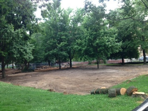 Near the end of demolition, week two, all of the playground equipment had been removed along with some disease trees.