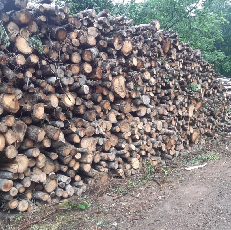 bois de chauffage taure