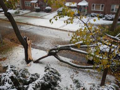 A tree split in half in the early hours of Oct. 30 on the 800 block of Hannah Avenue in Forest Park.