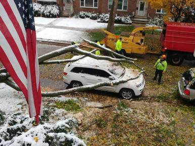 Forest Park Public Works clears a tree fallen on a car on the 800 block of Hannah Avenue on Oct. 30.