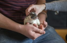 David Swygart, of Forest Park, holds one of his rats.