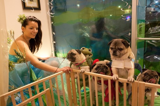 Jaclyn Scatena dressed as a royal mermaid, with her pug-nosed subjects dressed as various sea creatures, in the window of deedee & edee during Forest Park's holiday walk on Madison Street in 2012.