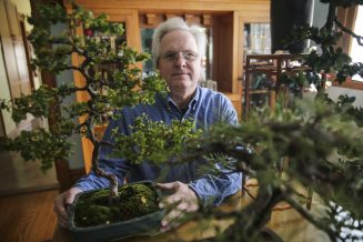 Mark Karczewski alongside some of his bonsai trees in his Forest Park home. (CHANDLER WEST/Staff Photographer)