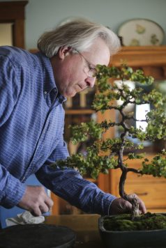 Karczewski cleans up one of his bonsai trees. (CHANDLER WEST/Staff Photographer)