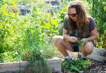 Laura Angelus prunes her garden plot at the Forest Park Community Garden on Saturday, Aug. 15. | Photo by Jennifer T. Lacey
