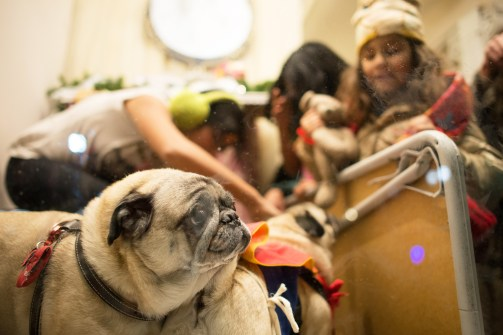 Children play with pugs in Deedee & Edee's display. | Stacey Rupolo/Contributor