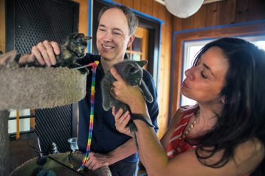 Craig Barnes, left, and Christina Vasilakis play with the litter of kittens they are currently fostering on Friday, July 13, at their home in Forest Park. | Alexa Rogals/Staff Photographer