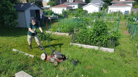 At least 54 independent gardeners have been tending the soil at the Forest Park Community Garden this year. | Submitted photo