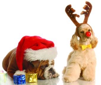 Animal Care League Holiday Bazaar