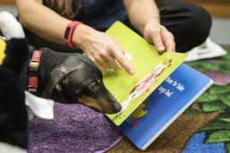Deke, a therapy dog from PAWSitive Therapy Troupe looks at at children's book about dogs. | Alexa Rogals/Staff Photographer