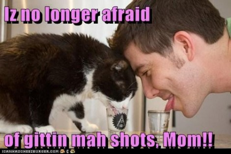 Lolcats shots
