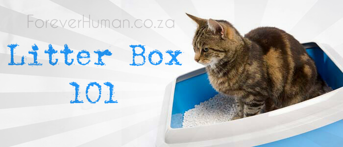 litter-box-training-101-know-your-cats-needs