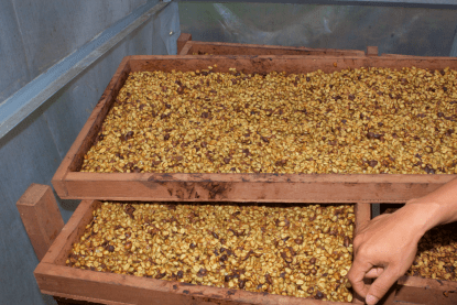 Honey Process involves leaving the mucous on the bean. It's sweet, I tried it to be sure.