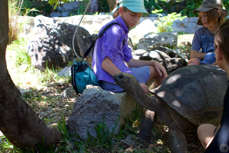 Ruby plays with Giant Doug (Carolyn, a Seychelles Tortoise)