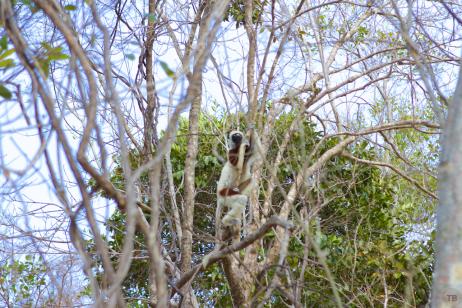 Our last lemur sighting