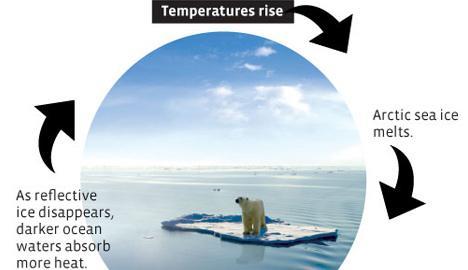 Polar Bear Schmolar Bear Why Should We Care About