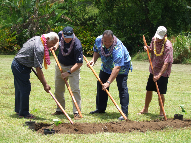 Dignitaries breaking ground with o`o.