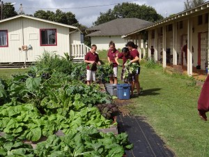St. Catherine's Gardening Club celebrates their efforts. Harvests from the garden make nutritious classroom snacks and encourage healthy eating.