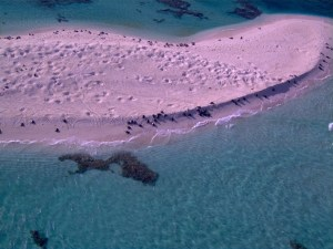 A view of Tern Island from the Puma. Numerous sea turtles and some monk seals can be seen.