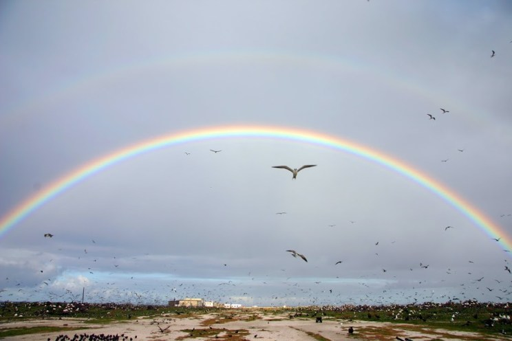 A view of Tern Island with seabirds and rainbows.