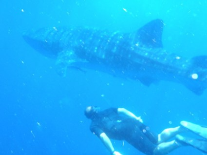 Andy and a whale shark, Isla Mujeres, Mexico