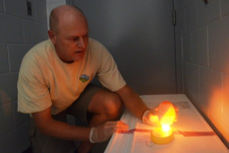"Eric VanderWerf, a biologist with Pacific Rim Conservation, ""candles"" a Laysan albatross egg at PMRF, Dec. 16, to determine viability for relocation to O'ahu. Photo by Stefan Alford"