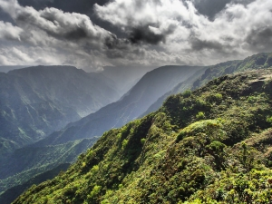 The slopes on which the chicks resided. Photo by Andre Raine/Kaua'i Endangered Seabird Recovery Project
