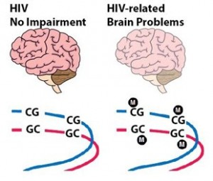 manoa-cognitivefunction-hiv