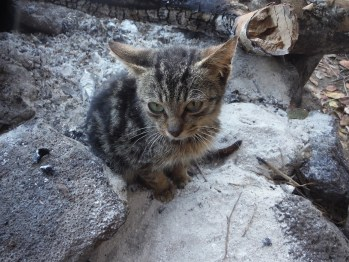 Kukui finds a warm spot in the early morning, right on top of the ashes from a late-night fire in Kalalau Beach. He was brought from Kalalau by Halli Holmgren, and adopted by a family. A small group of free-roaming and feral cats still live in Kalalau.