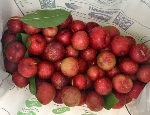 Plum Harvest in Koke'e Starts Fourth of July
