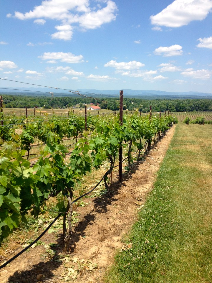 vineyard/winery