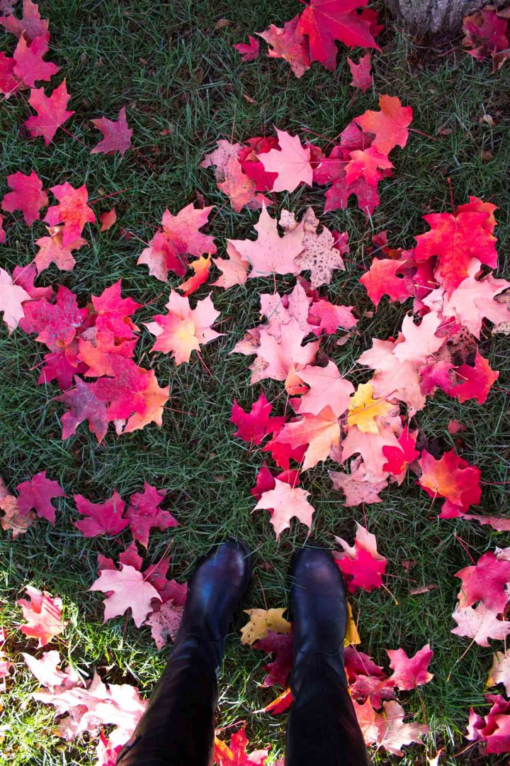 Life: Fall 2016 - Changing Leaves // Fork in the Kitchen