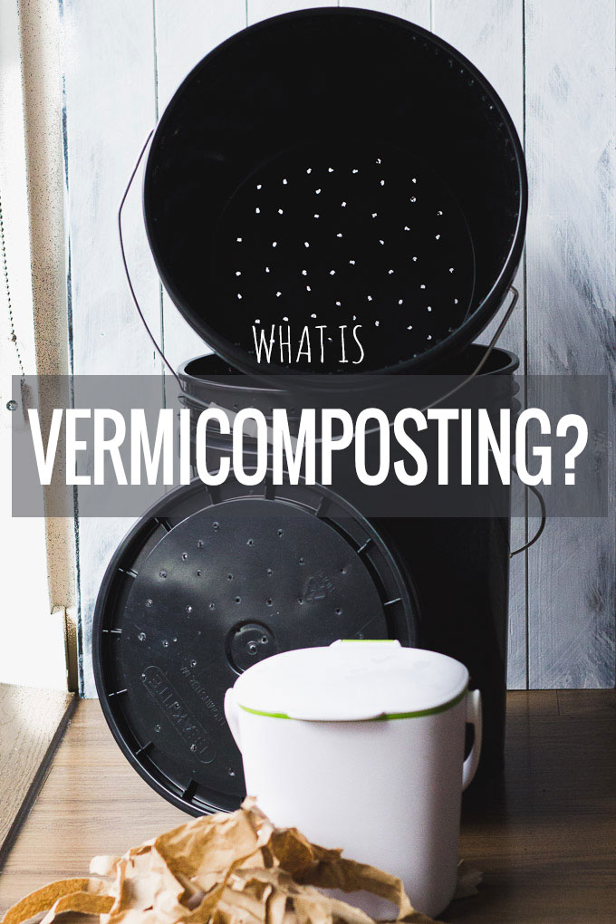 What is Vermicomposting? A journey to sustainability. | Fork in the Kitchen