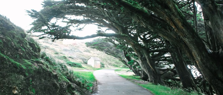 The tree path to Point Reyes lighthouse.