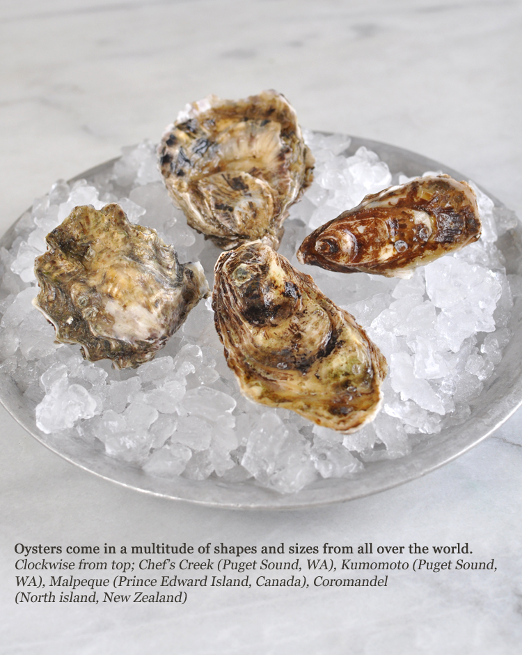 Different types of oysters