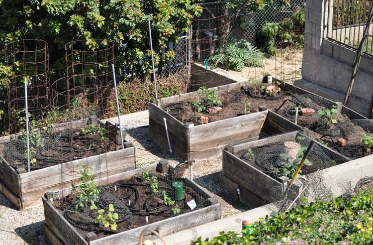 Garden2014-02