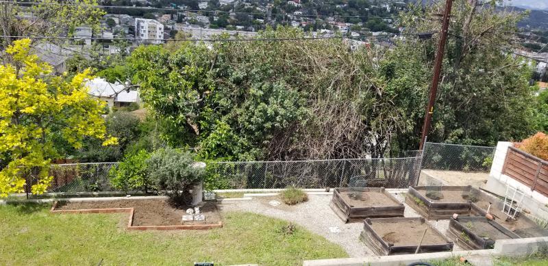 Garden after three weeks