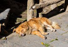 Abandono de animales - Formula Medica