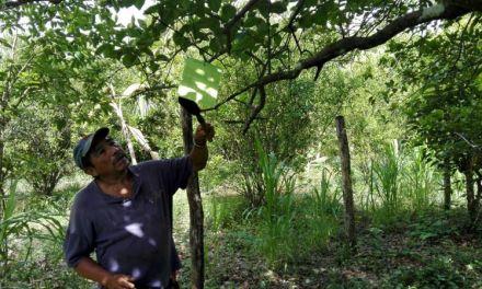 Urge renovación de Junta Local de Sanidad Vegetal