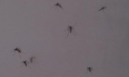 No hay reportes de Dengue, Zika y Chikungunya; SSA