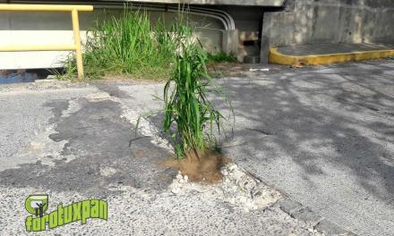 Siembran Plantas en Baches del Puente de La Mata